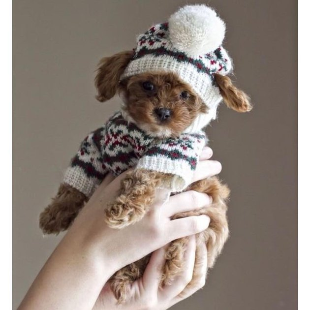 Puppy wearing sweater and matching hat with pom-pom, held aloft.