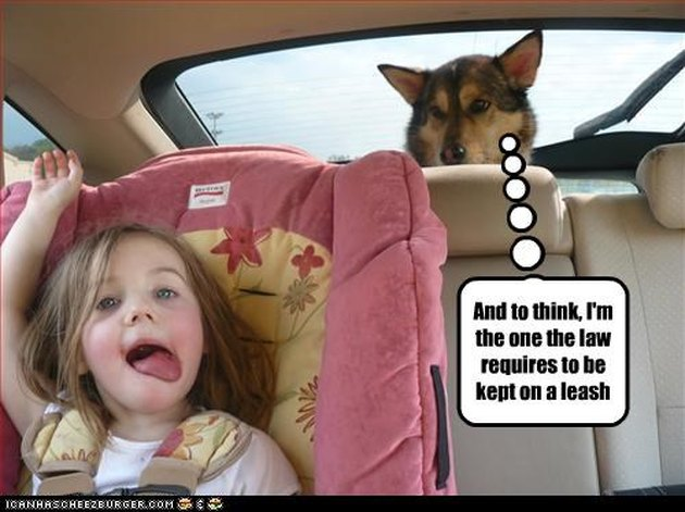 Dog judging little girl in backseat of car.