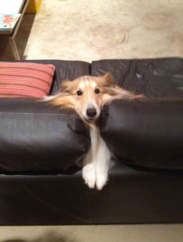 Animals Who Just Can't Figure Life Out