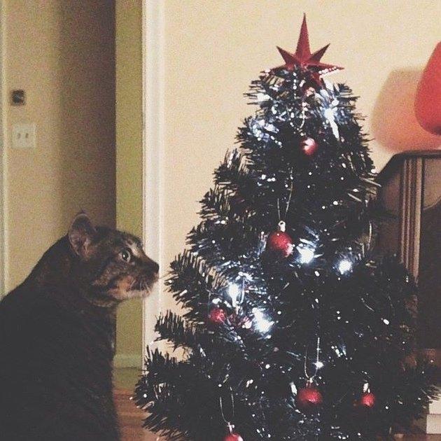 Cat staring at Christmas tree