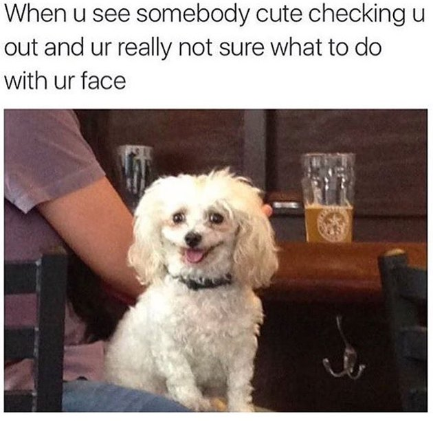 Dog in a bar with an awkward smile. Caption: When u see somebody cute checking u out and ur really not sure what to do with ur face.