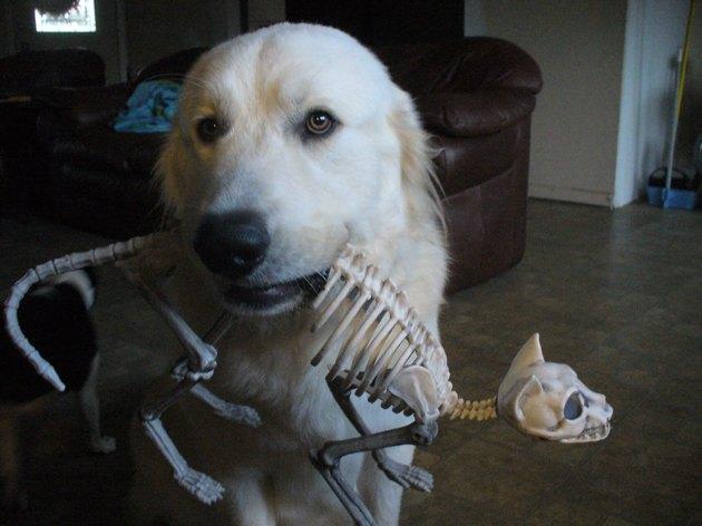 Dog with cat skeleton decoration