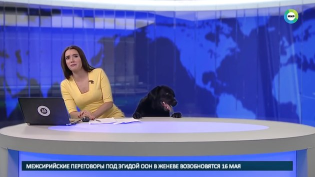 Russian dog crashes Mir24 TV newscast