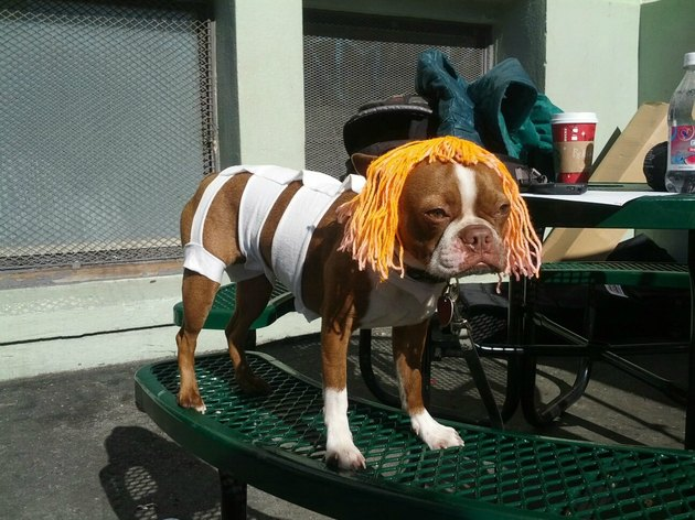 Dog dressed as Leeloo from The Fifth Element