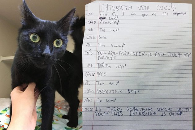 "Girl's ""Interview"" With Cat Gets Real, Really Fast"