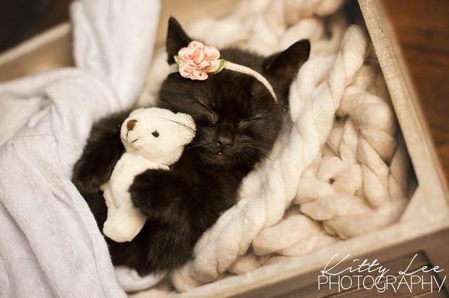 Photoshoot of sleeping kitten breaks internet with cuteness