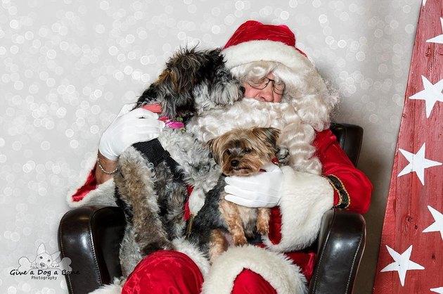Dog sniffing Santa's beard