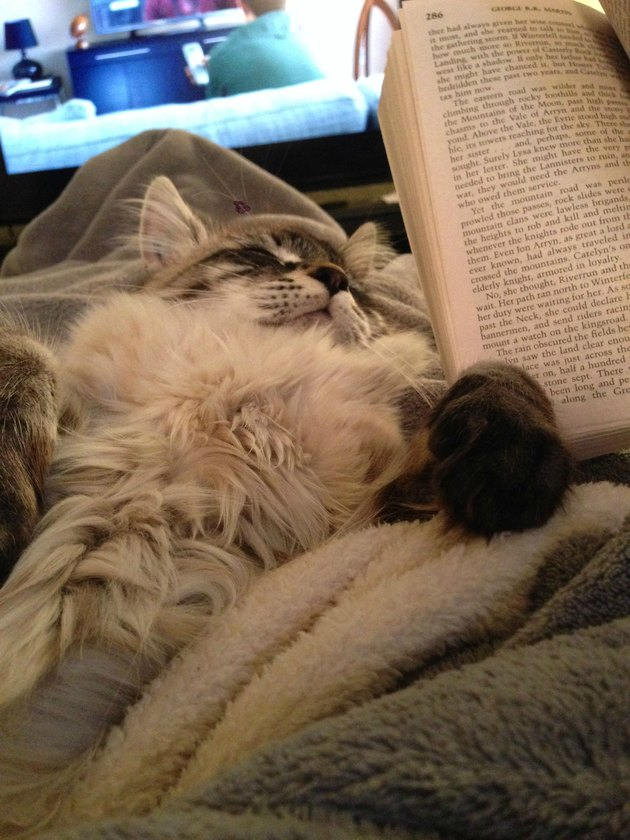 Cat asleep on lap with book