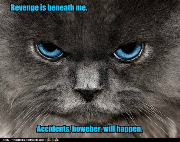 "Angry looking cat with caption: ""Revenge is beneath me. Accidents, howeber [sic], will happen."""