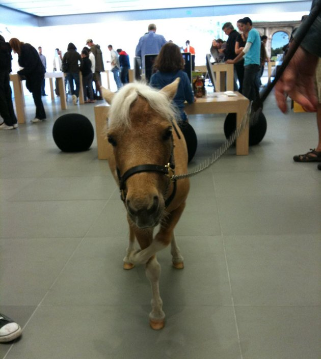Donkey at Apple Genius Bar