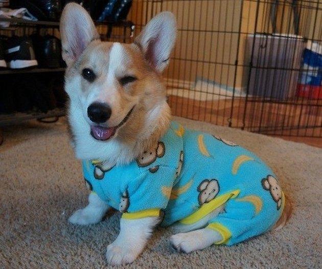 Dogs in pajamas hero image