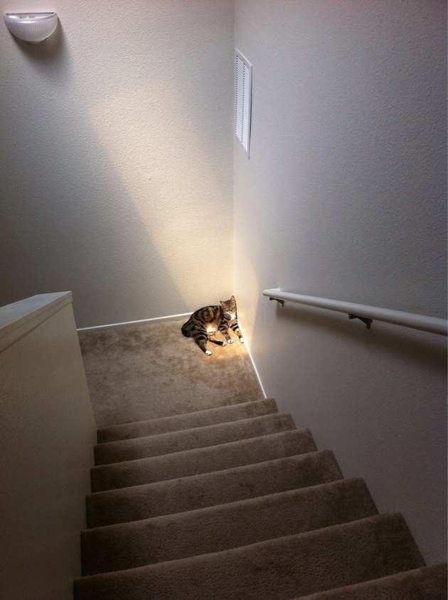 Cat in sunny spot on stair landing.