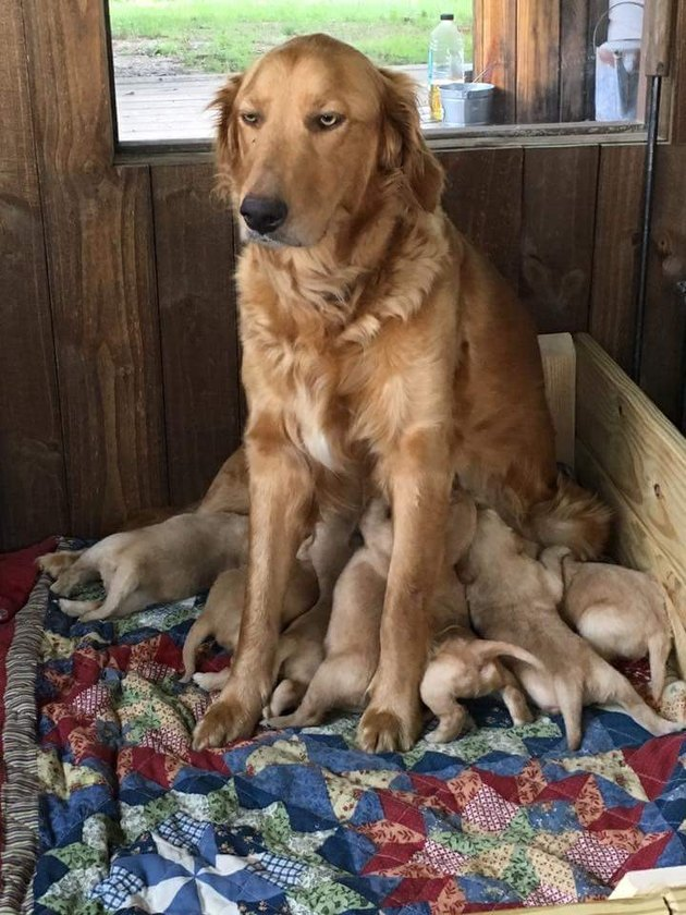 Animal Parents Who Are Just Doing Their Best