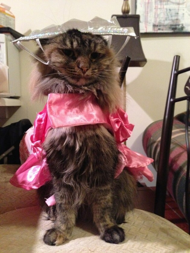 Cat wearing ill-fitting princess costume.