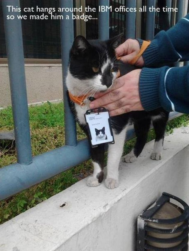 Stray cat awarded with ID badge from IBM