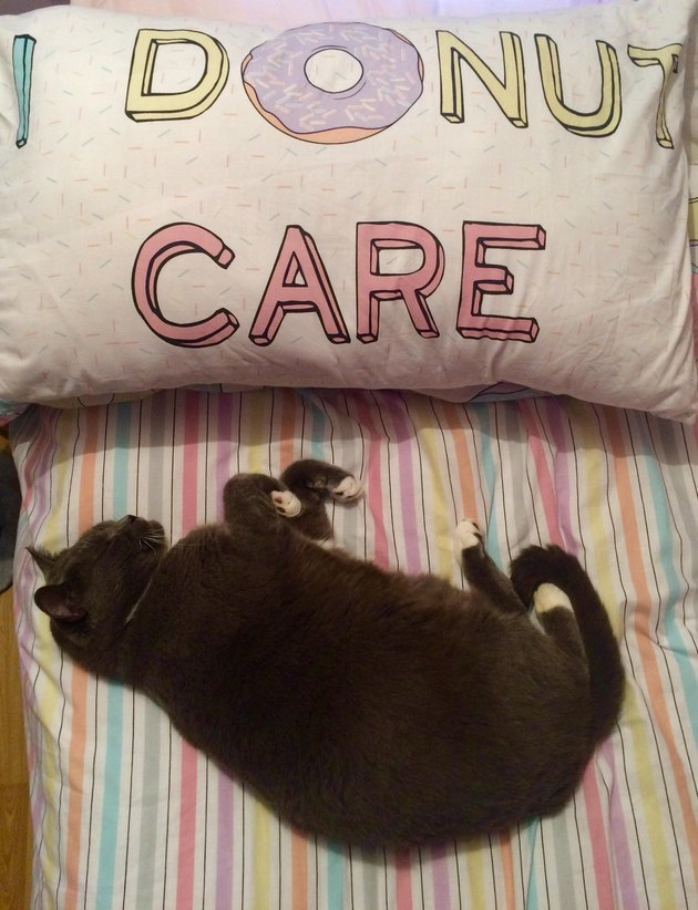 "Cat sleep next to pillow that says ""I Donut Care"""