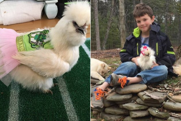 This Little Boy's BFF Is A Therapy Chicken In A Pink Tutu
