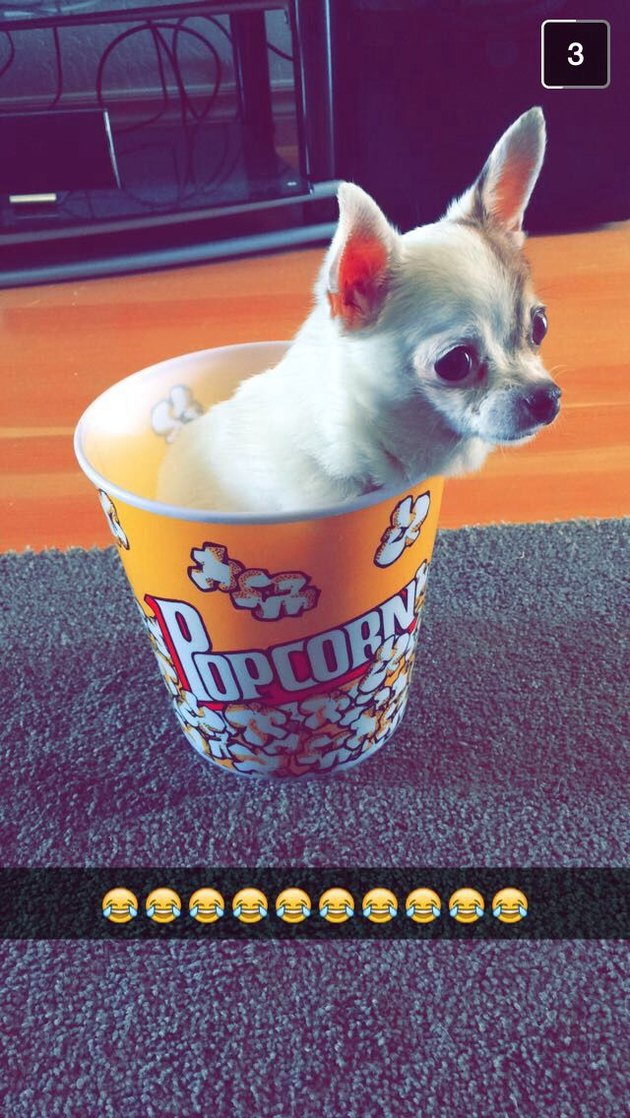 Dog in popcorn bucket