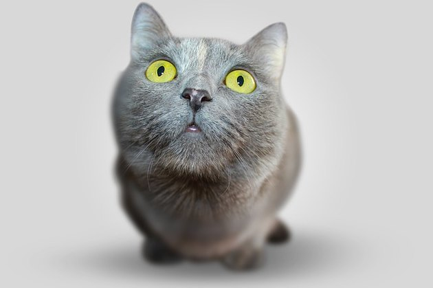Gray cat with wide green eyes