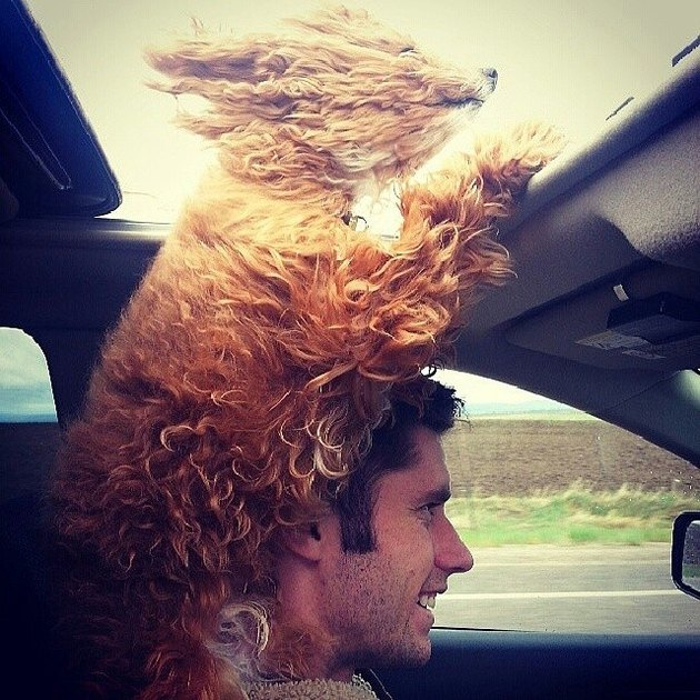 Dog sticking its head out of sunroof.