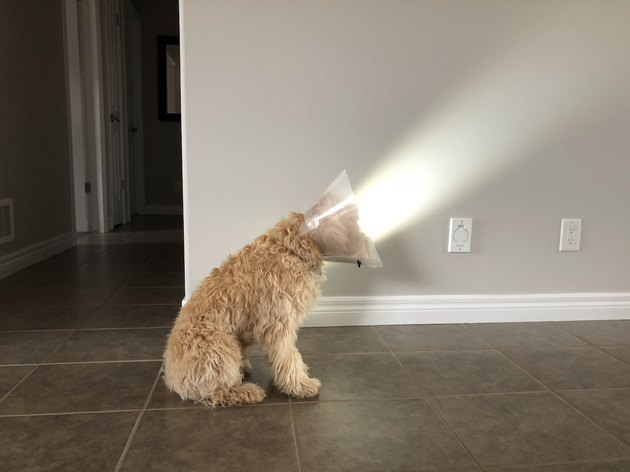 Dog wearing E-collar sitting in a beam of light