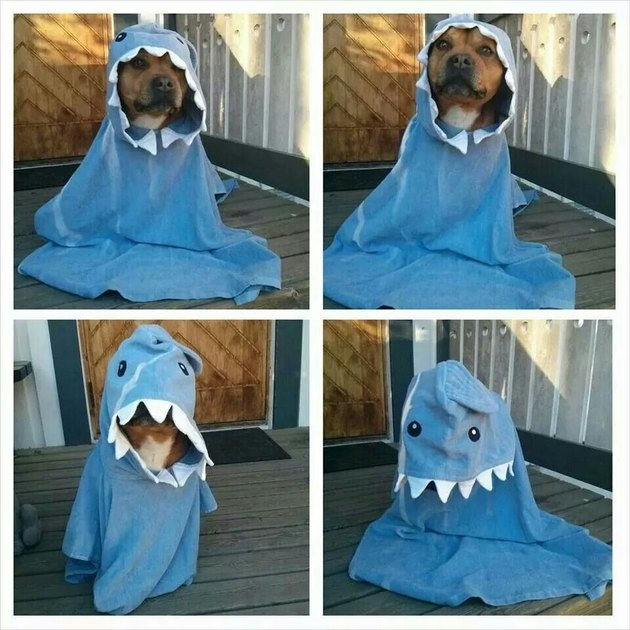 Dog in shark costume that's way too big