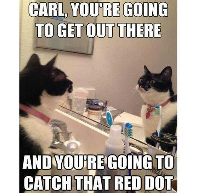 Cat looking at itself in the mirror. Caption: Carl, you're going to get out there and you're going to catch that red dot