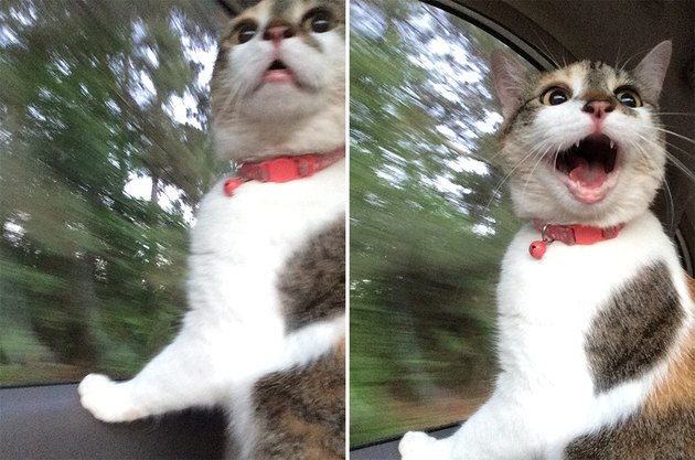 Startled cat in car.