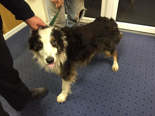 Casey shortly after being found