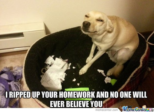 "Dog sitting next to ripped paper with caption: ""I ripped up your homework and no one will ever believe you."""