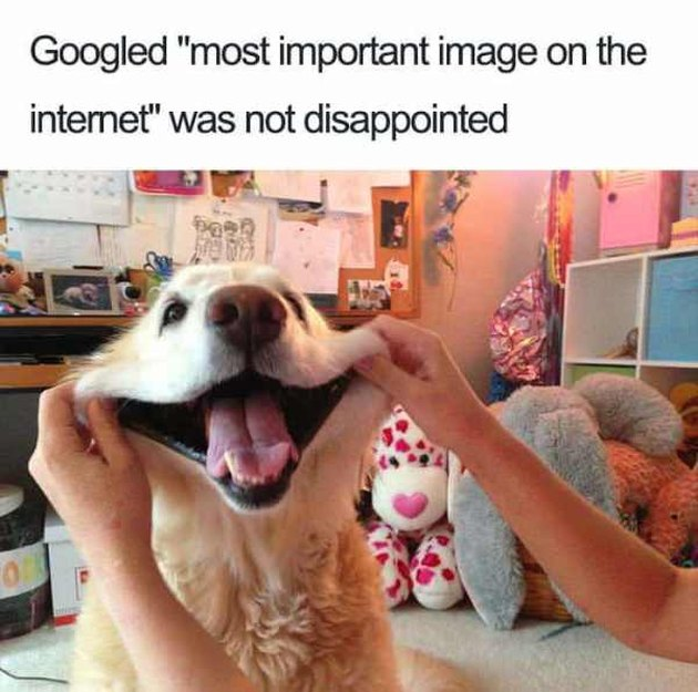 "Dog with its cheeks being stretched into a smile. Caption: I Googled ""most important image on the internet"" was no disappointed"