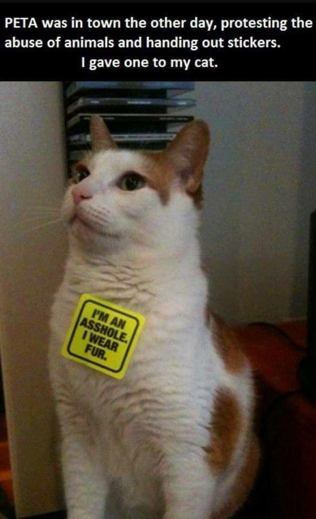 "Cat with PETA sticker saying ""I'm an asshole. I wear fur."""