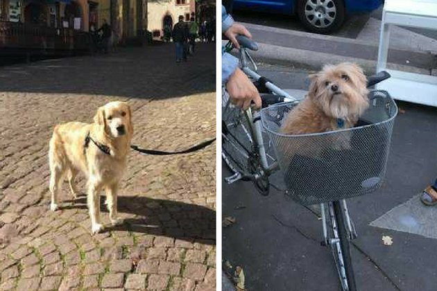 Woman Takes Only Photos Of Dogs During Vacation To France