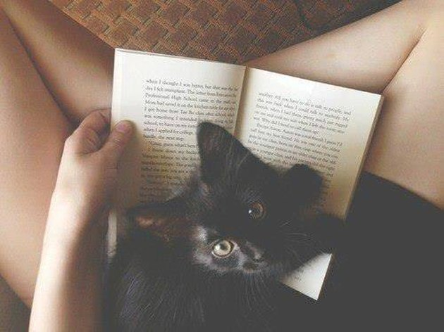 Cat on Book