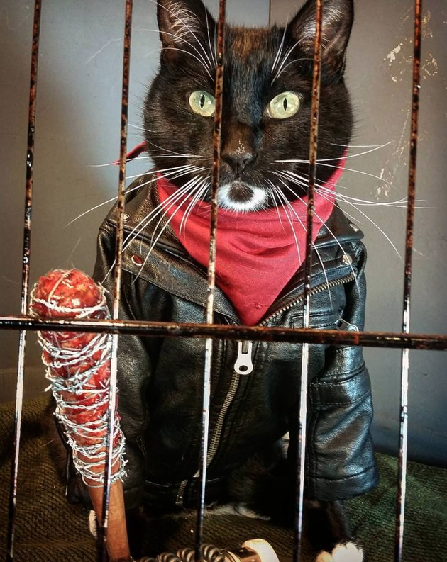 Cosplay cat lives every day like it's Halloween