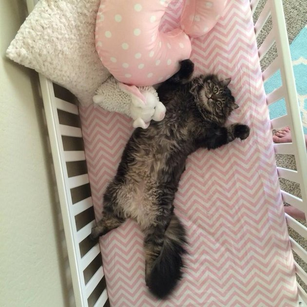 Happy, comfy cat in a baby's crib