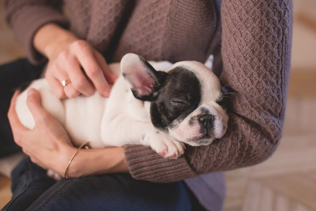 9 Pet Naming Techniques To Find The Perfect Fit