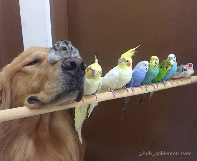 Dog, hamster, and birds