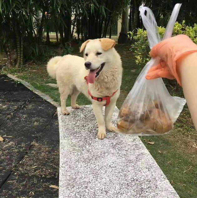 This Dog In A Bag Was About To Be Dinner, But Then The Best Thing Happened