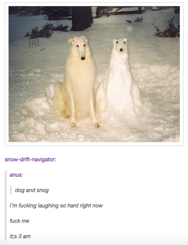 Just 55 Tumblr Posts About Animals That Will Make You LOL