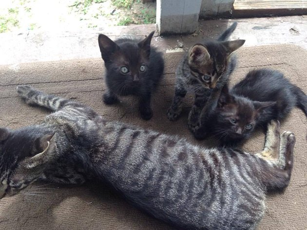 Family Does Good Dead For Stray Cat Who Led 3 Unexpected Guests Into Their Camp