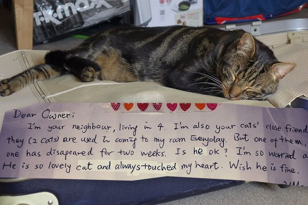Cat's Double Life Revealed By Mysterious Note Attached To Collar