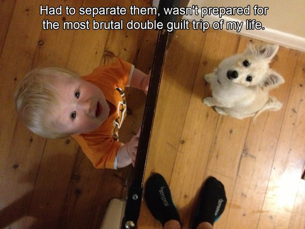 Toddler and puppy on opposite sides of baby gate
