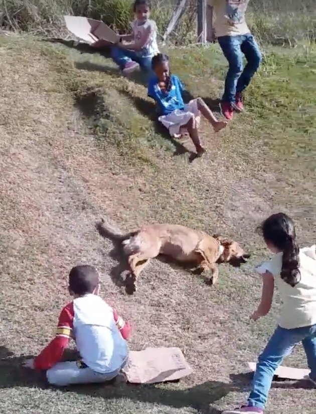 This Doggo Sliding Down A Hill Is Your Childhood But Better