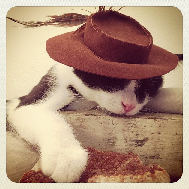 Cat in vintage hat.