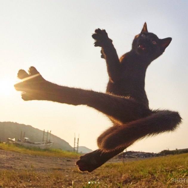 Ninja cats practicing martial arts is a now a thing