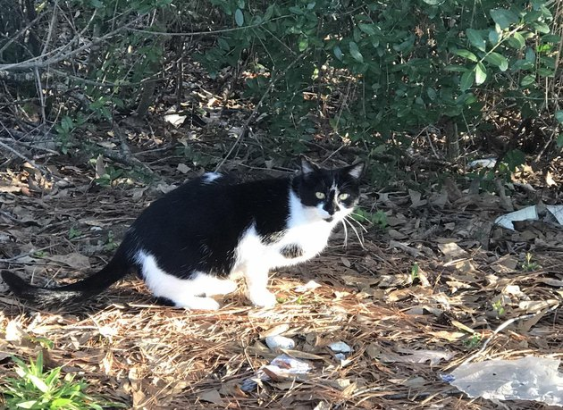 A Woman Rescued This Feral Cat After Two Years and Got an Incredible Surprise