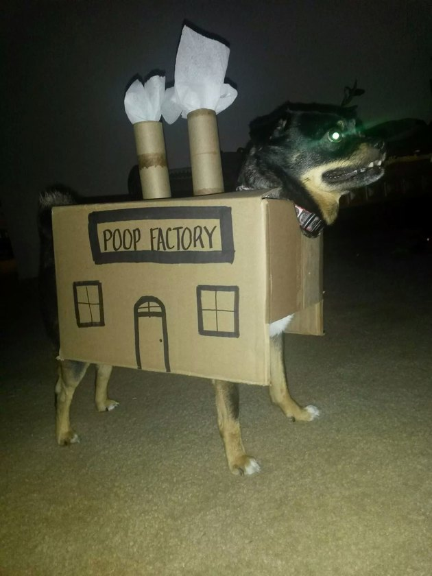 "Dog in cardboard box labeled ""poop factory"""