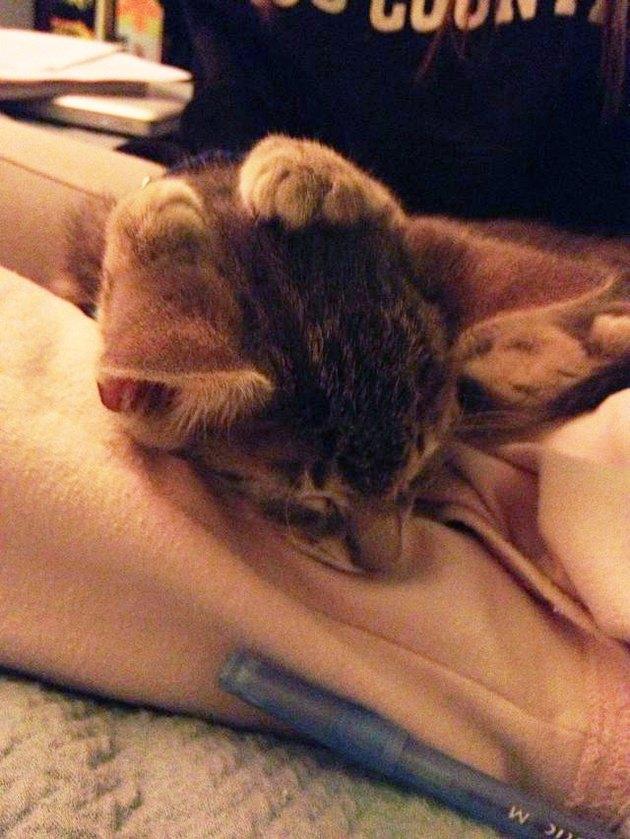 Just 26 Kittens Sleeping Real Weird