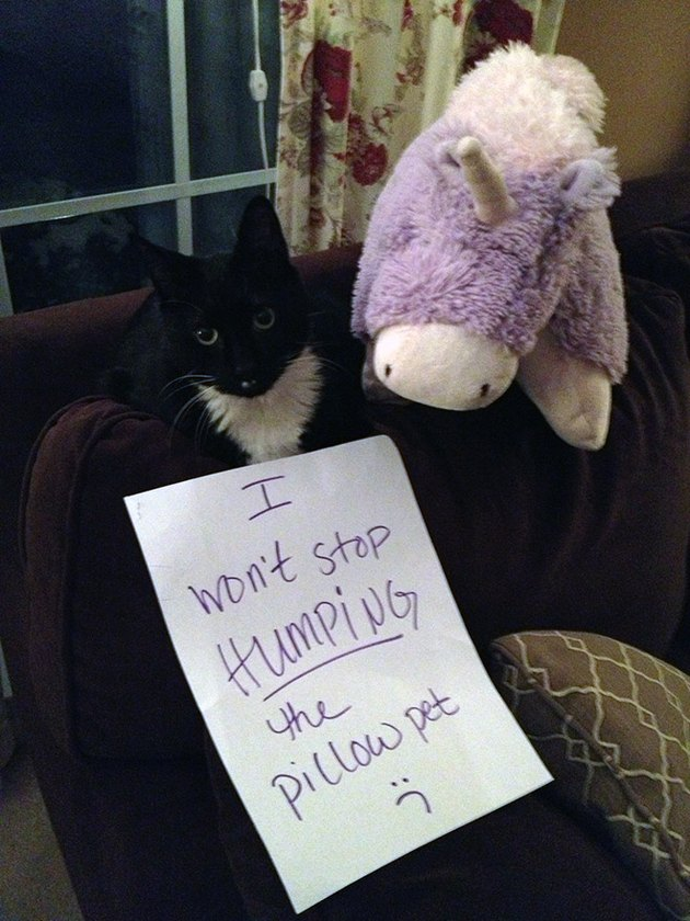 Best Cat Shaming Pictures on the Internet